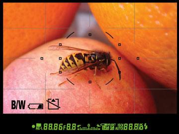 Обзор Nikon D90