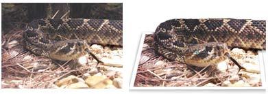 Photoshop idejas Snake