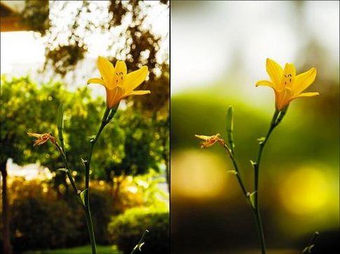 На фото слева - большая глубина резкости (маленькое отверстие диафрагмы), справа - небольшая глубина резкости (большое отверстие диафрагмы)