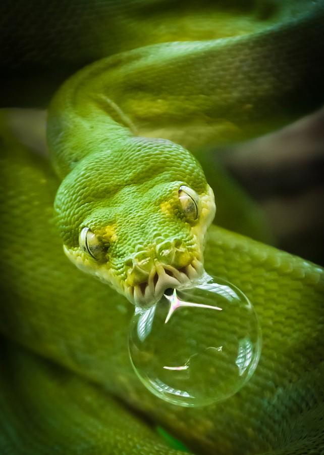 1_snake