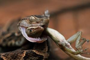 4_snake
