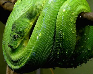 99_snake