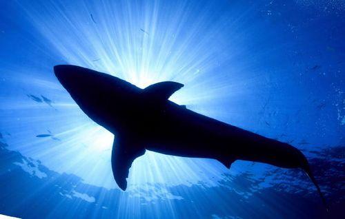 ММФФ «Золотой дельфин»