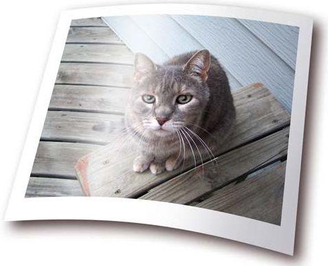 Фотобумага - сорта, виды форматы