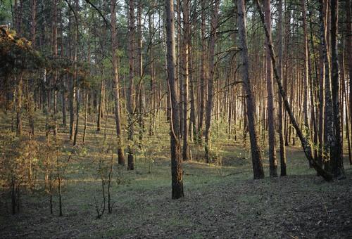 Выставка «Лесные истории»
