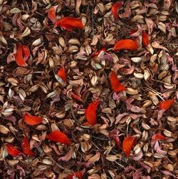 Сицилийская мозаика. 2012