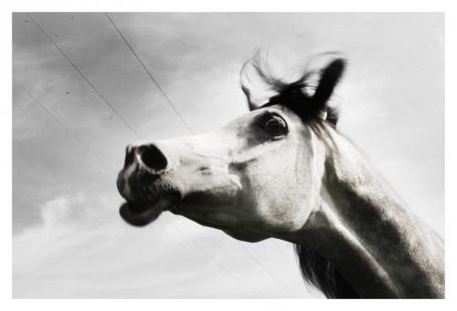The Raw Horse Себастьяно Витале
