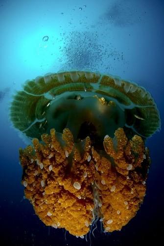ежегодный конкурс подводной фотографии