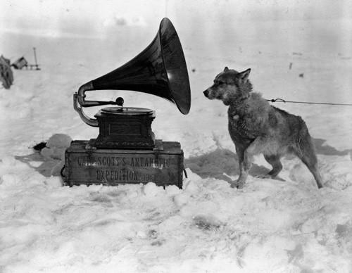 """Собака Крис слушает патефон во время Британской антарктической (""""Терра Нова"""") экспедиции 1910-1913 гг. Фотография, сделана Гербертом Понтингом в январе 1911."""