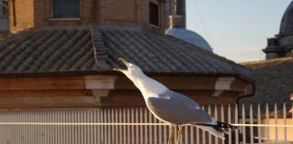 Дикие птицы - чайка