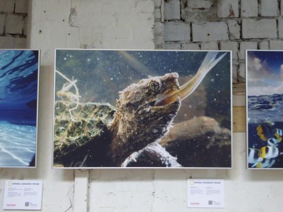 Открылась фотовыставка «125 лет National Geographic»