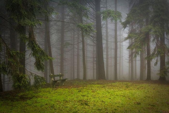 Фотосъемка в тумане