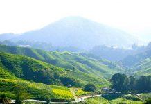 Чайные плантации Камерон-Хайлендс