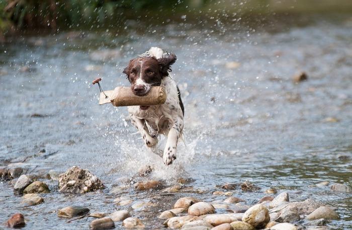 Собака в динамике