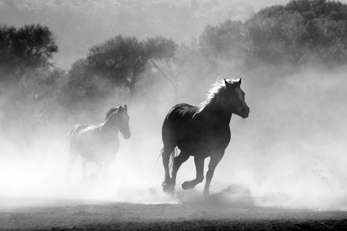 Бегущие кони
