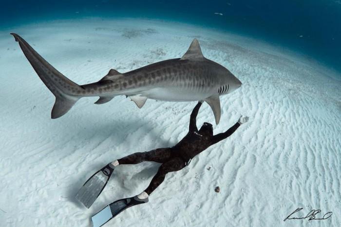 Рауль Бойзель - акулы