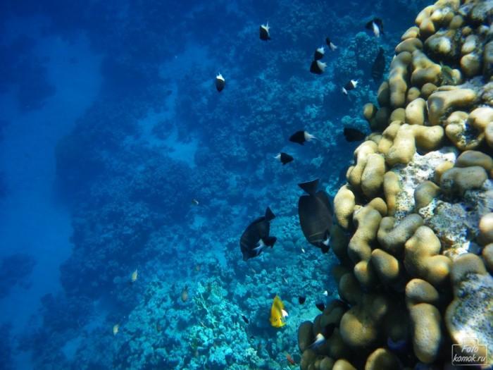 underwater-01