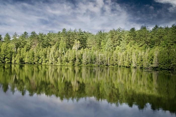 Лес у воды
