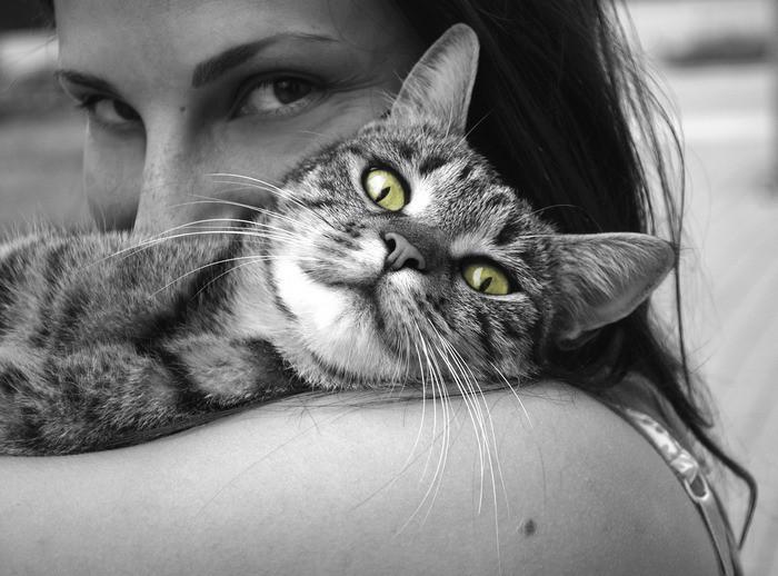 Кошка -зеленые глаза