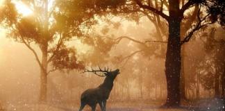 Олень в лесу