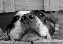 Милый пес