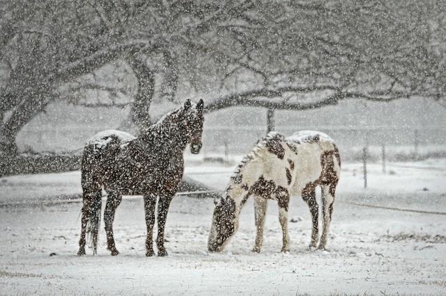 Съемка в снегопад