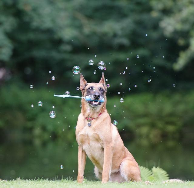 soap-bubbles-672639_640
