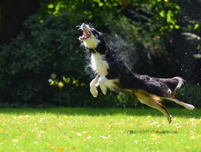 Собака играет с мыльными пузырями