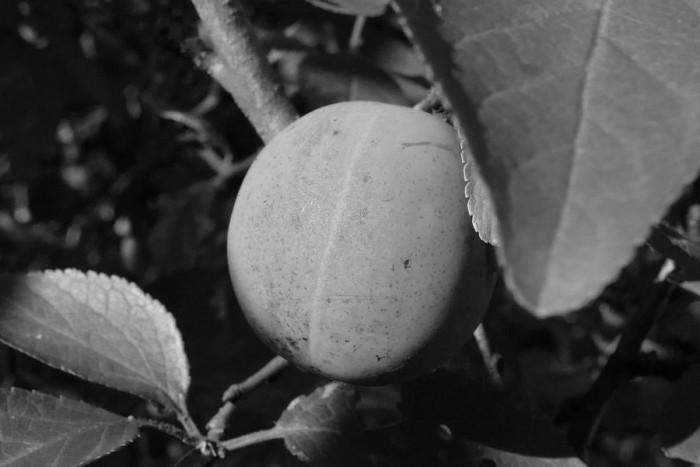 Исходное черно-белое изображение
