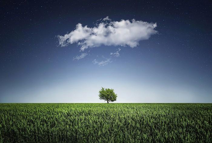 Дерево под облаками