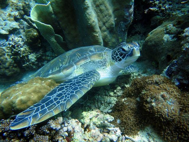 Черепахи на Палаване