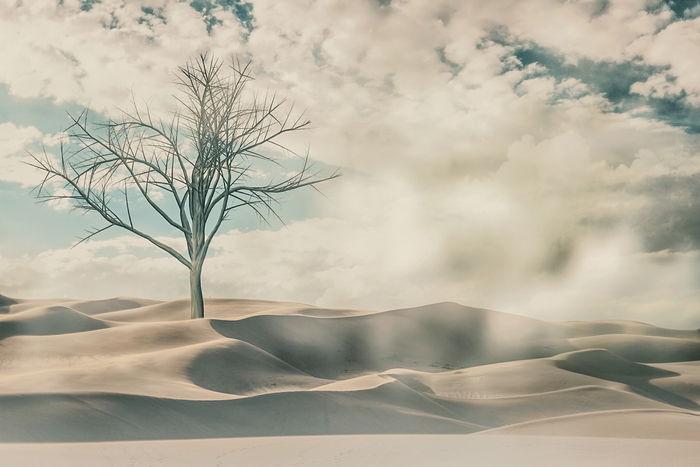 Дерево в дюнах
