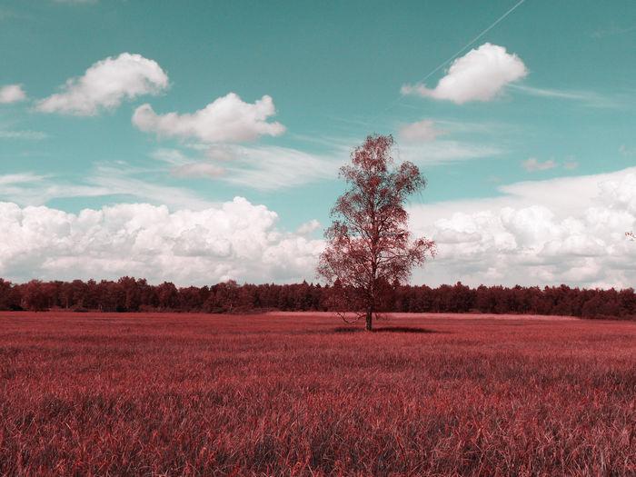 Инфракрасная фотография - пример 1
