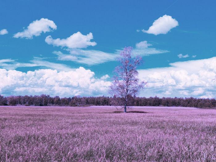 Инфракрасная фотография - пример 2