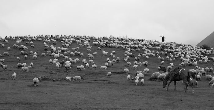 Фотовыставка «Перегон» - моменты из жизни чабанов