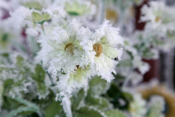 Зимняя фотосъемка цветов