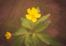 Рисунок из фото - AKVIS OilPaint