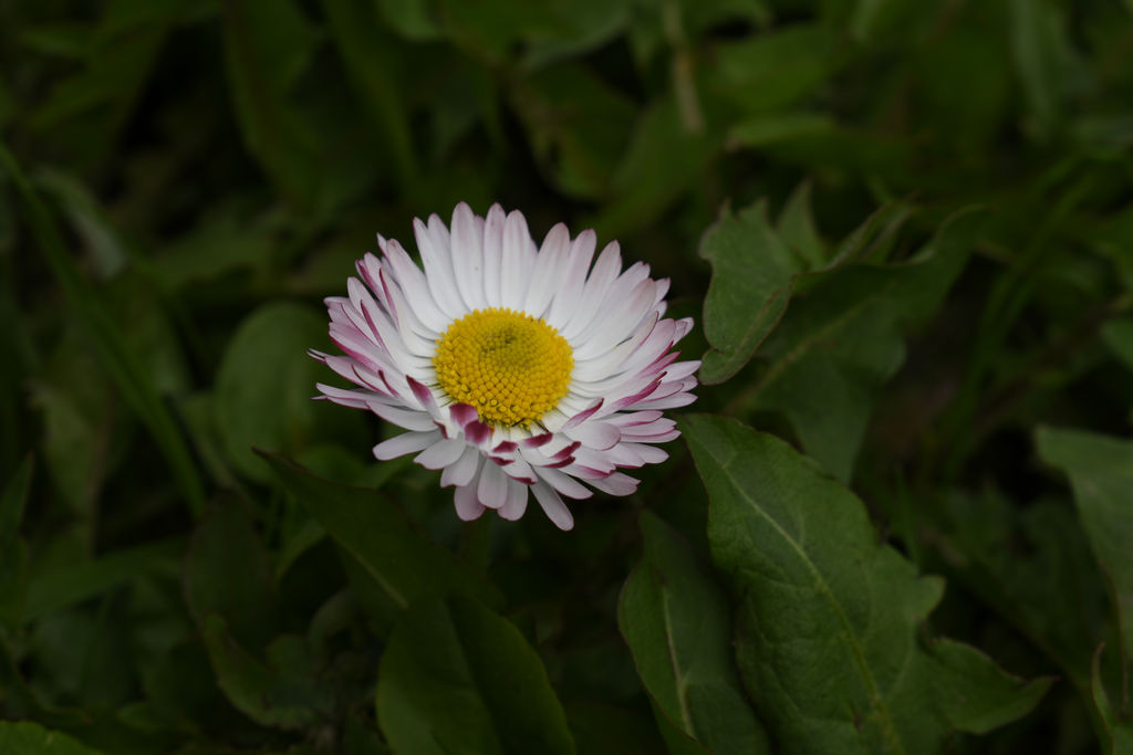 Nikon D5600 - примеры фотографий