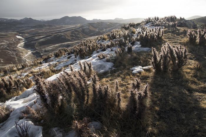 Венсан Мюнье - фотопроект о вымирающих животных Тибета