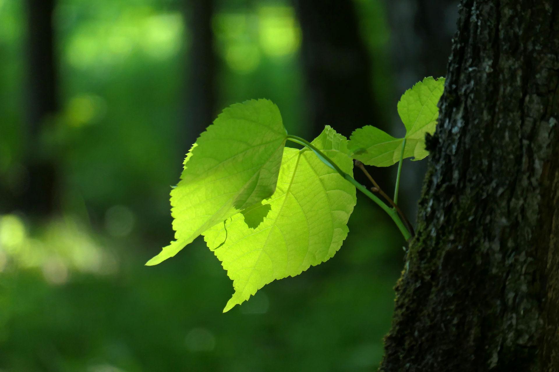 Луч солнца на листве