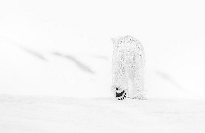 """""""Встречи с дикой природой"""" - фотовыставка Дэвида Ярроу"""