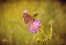 Бабочка сидящая на цветке