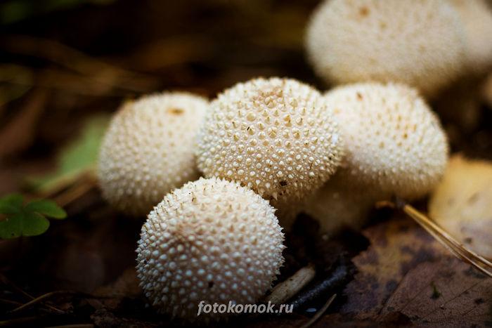 Макро-грибы