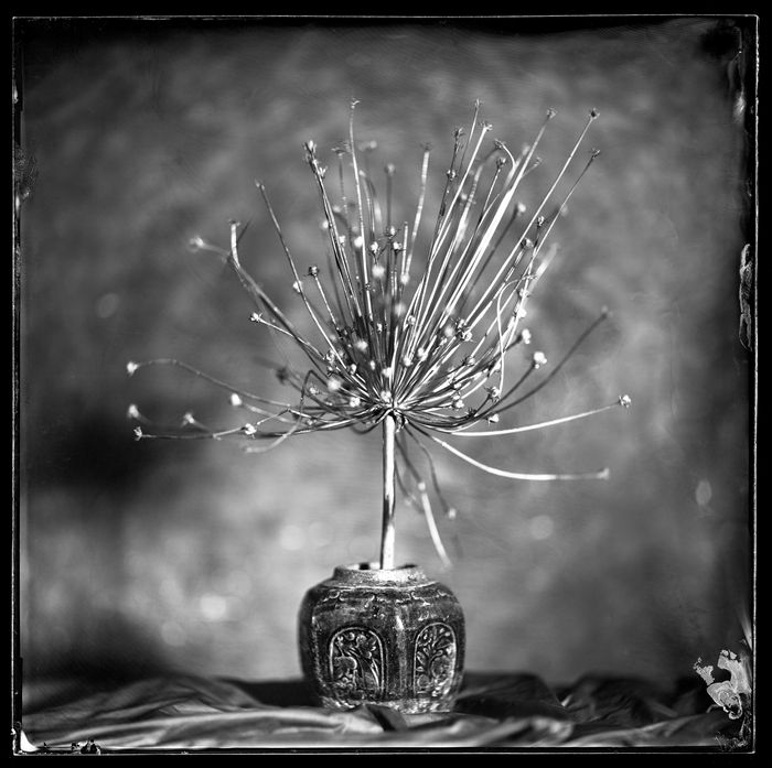 Copyright: © Peter Eleveld, Netherlands, Winner, Professional, Still Life, 2021 Sony World Photography Awards