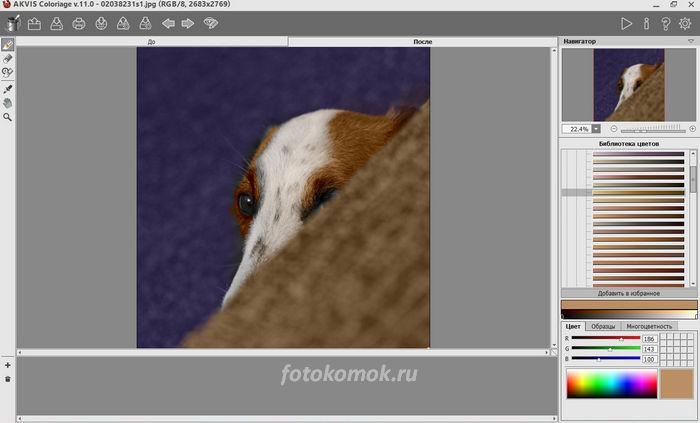 Цветное фото с собакой
